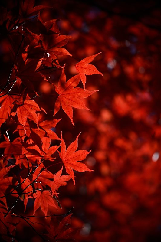 2013京都の紅葉!・善峰寺 其の二_f0032011_19364585.jpg
