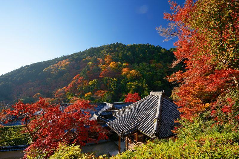 2013京都の紅葉!・善峰寺 其の二_f0032011_1937292.jpg