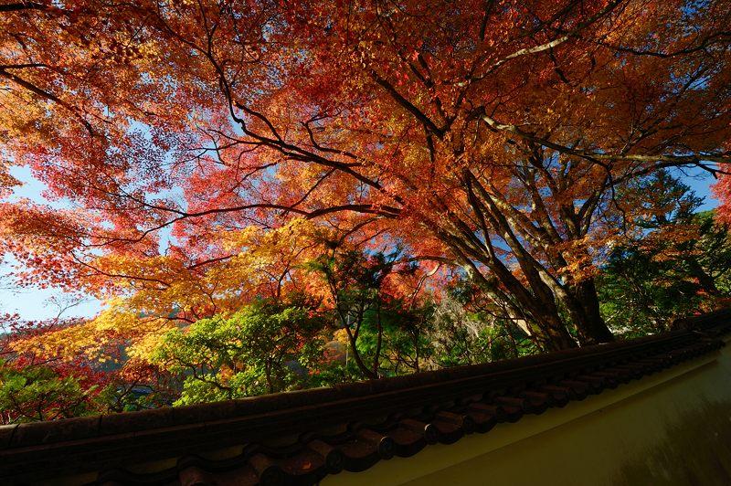 2013京都の紅葉!・善峰寺 其の二_f0032011_1938336.jpg