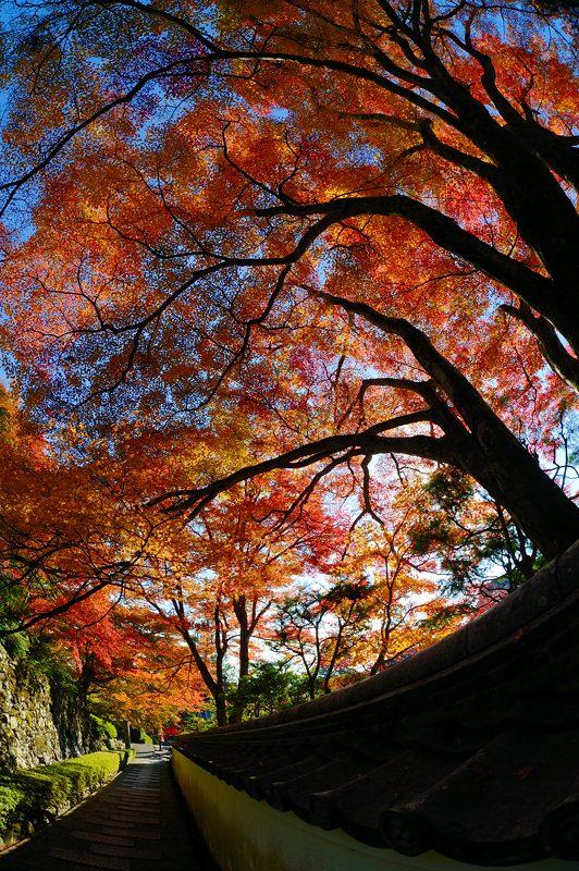 2013京都の紅葉!・善峰寺 其の二_f0032011_19384411.jpg