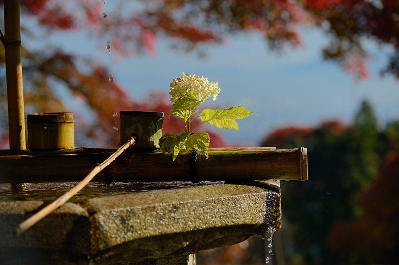 2013京都の紅葉!・善峰寺 其の二_f0032011_1938626.jpg