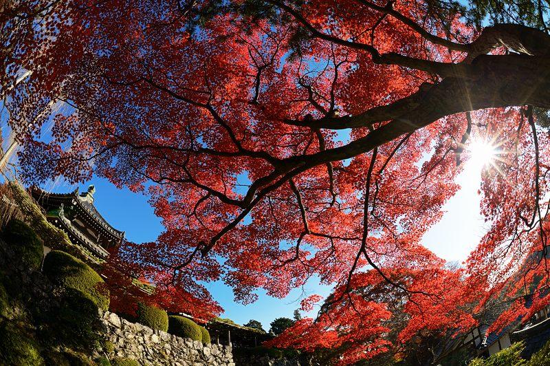 2013京都の紅葉!・善峰寺 其の二_f0032011_19391752.jpg