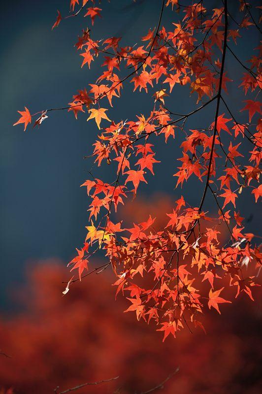 2013京都の紅葉!・善峰寺 其の二_f0032011_1939680.jpg