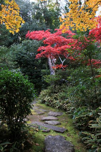 大徳寺 高桐院 13紅葉だより48_e0048413_19101828.jpg