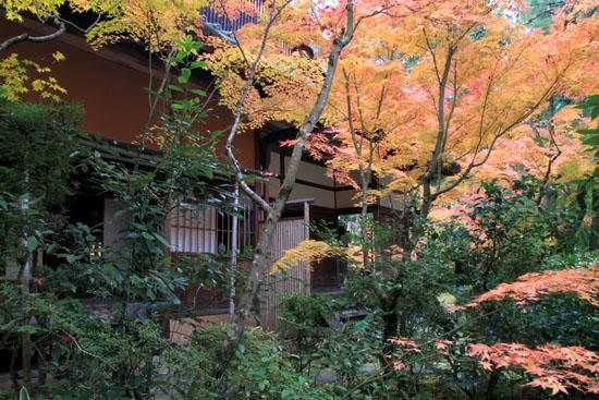 大徳寺 高桐院 13紅葉だより48_e0048413_19103357.jpg