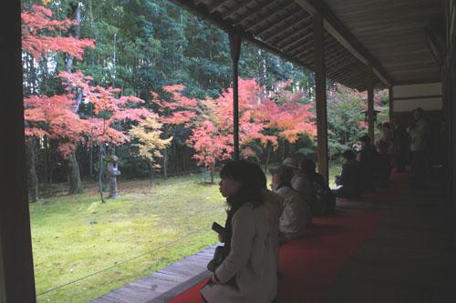 大徳寺 高桐院 13紅葉だより48_e0048413_1994870.jpg