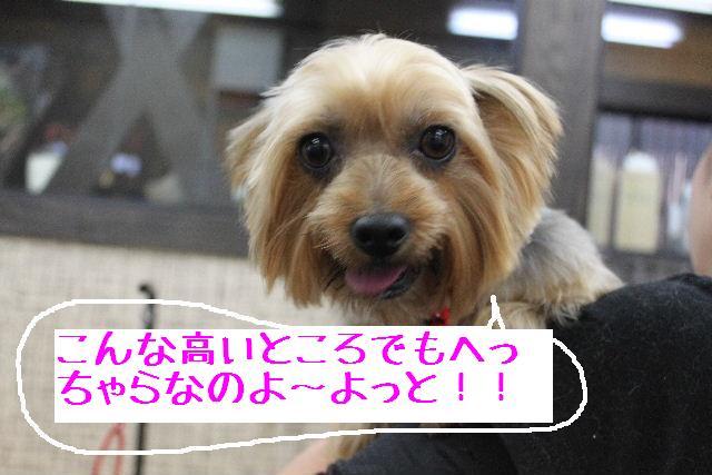 b0130018_1646427.jpg