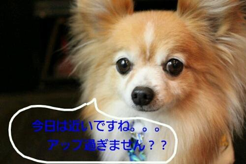 b0130018_16481284.jpg