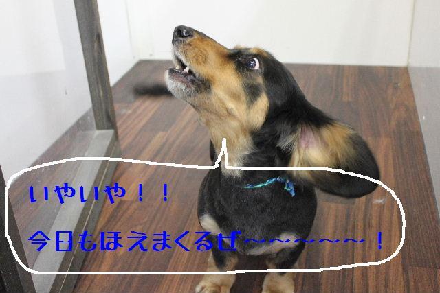 b0130018_16481684.jpg