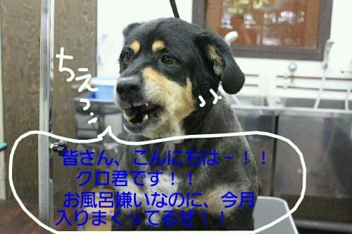 b0130018_16495841.jpg