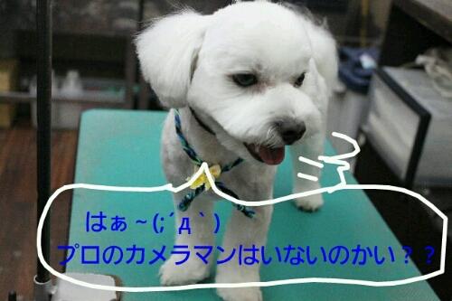 b0130018_20114499.jpg