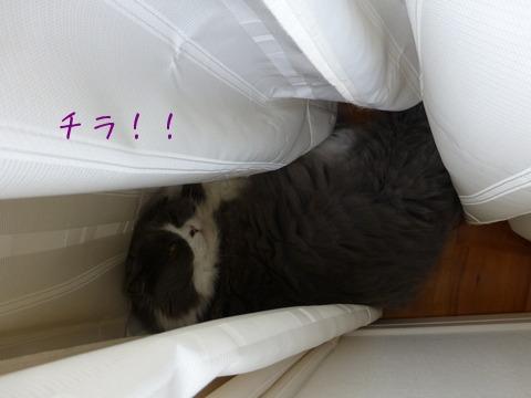 軟体猫_e0237625_15345727.jpg