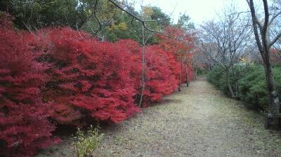 ハムヲさんの朝ラン日記  (2013/11/25)_a0260034_11531948.jpg