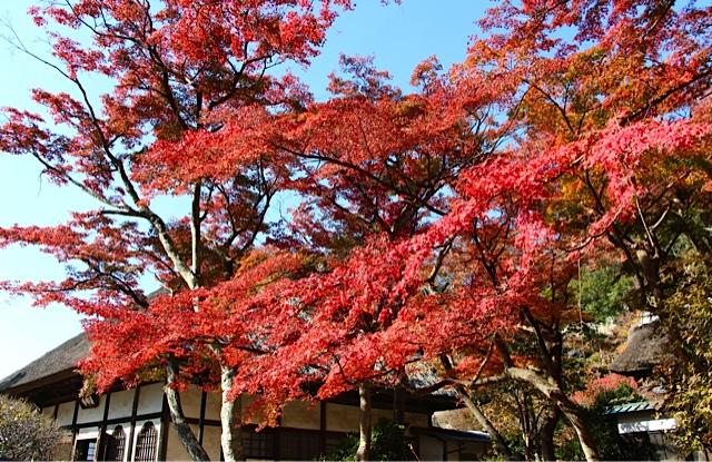 秋散歩@北鎌倉_d0106242_9171333.jpg