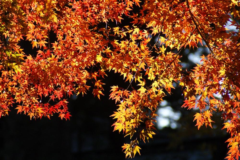 鹽竈神社 本殿へ向かう_d0001843_23194336.jpg