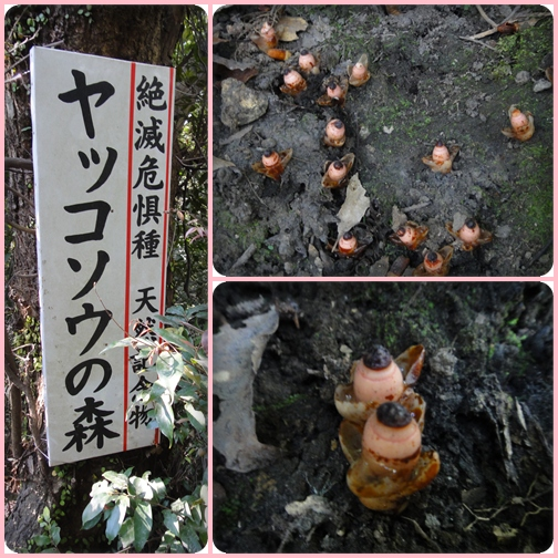 南九州の山旅・①・・・・刀剣山_e0164643_10415588.jpg