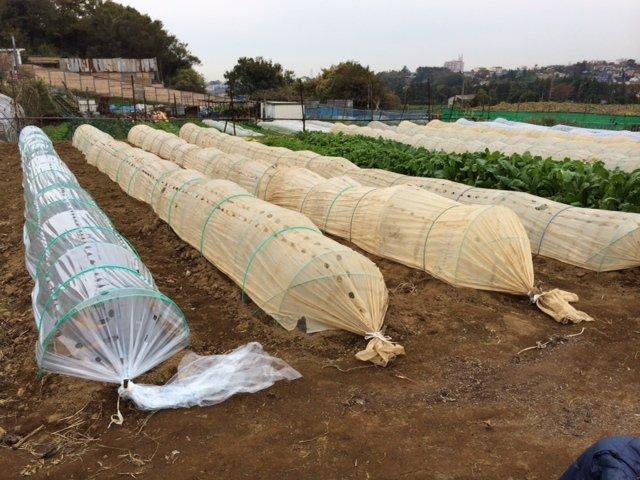 エンドウ豆&蚕豆のトンネル張り替え作業終了_c0222448_12360435.jpg
