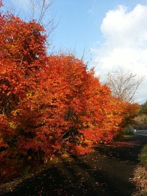秋のドライブコース_c0172049_21201188.jpg