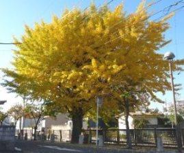 続 徳山ダムの水は「品質保証」されていない_f0197754_1343684.jpg