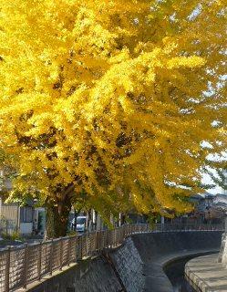 続 徳山ダムの水は「品質保証」されていない_f0197754_1423431.jpg