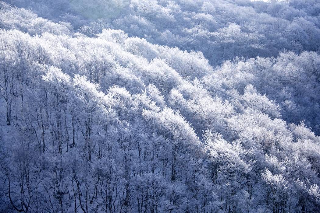 雪つもりし・・・雄国沼_e0271864_21524131.jpg