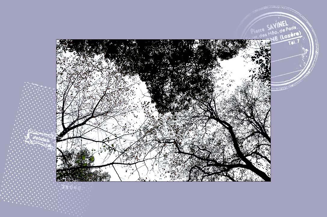 f0198771_02754.jpg