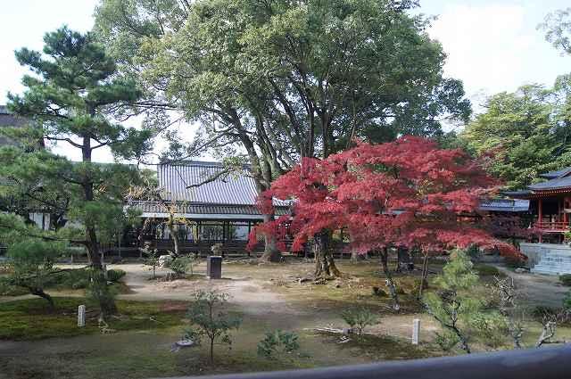 大覚寺へ_e0181373_21455986.jpg