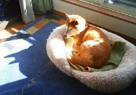 柴犬さんカレンダー_b0011075_152435.jpg