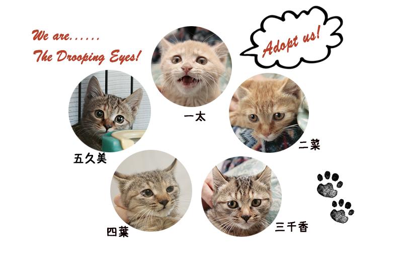 タレメーズ仮名決定!_c0223478_21364646.jpg