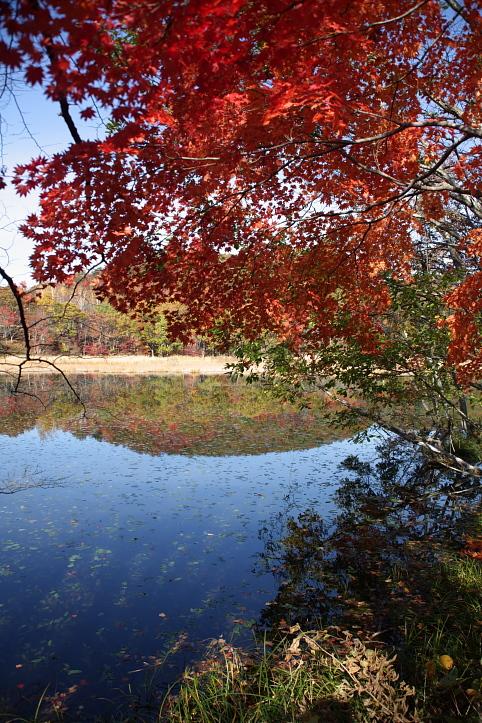 下郷町 観音沼自然公園の紅葉 その3_e0165983_12274370.jpg