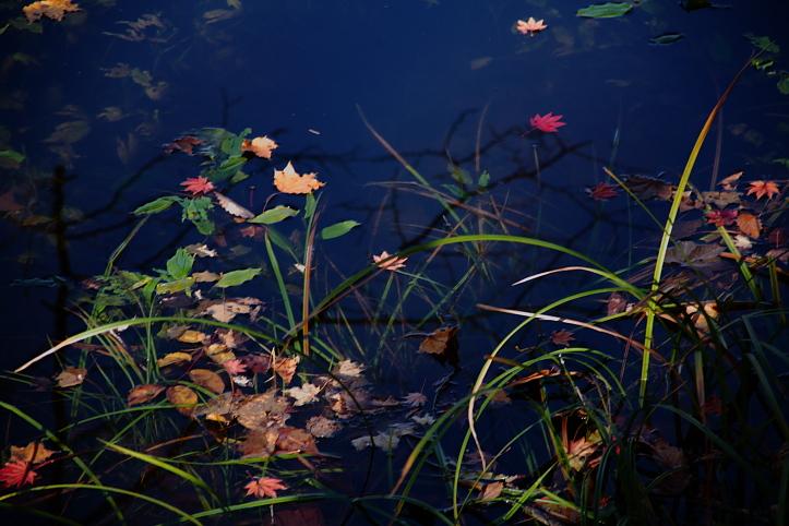 下郷町 観音沼自然公園の紅葉 その3_e0165983_12291072.jpg