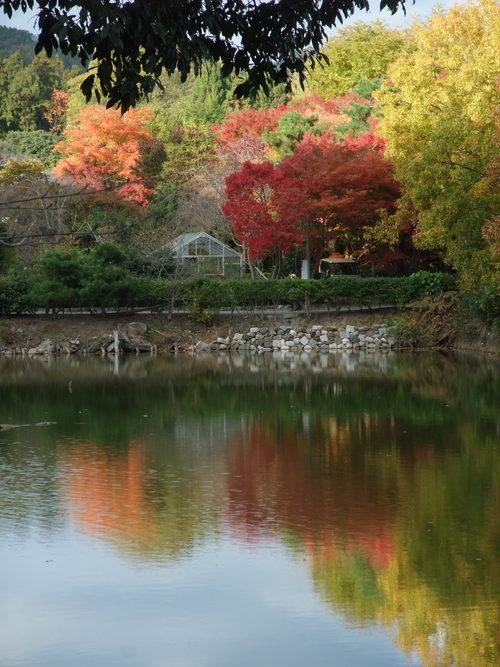 秋の京都_d0105395_4163566.jpg