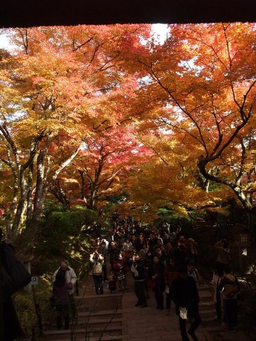 秋の京都_d0105395_475980.jpg