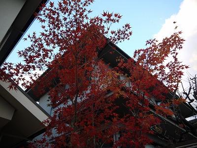 2013年 河内長野市の庭_a0233896_13115889.jpg