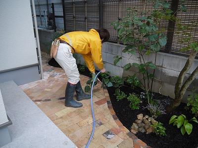 2013年 河内長野市の庭_a0233896_1434206.jpg