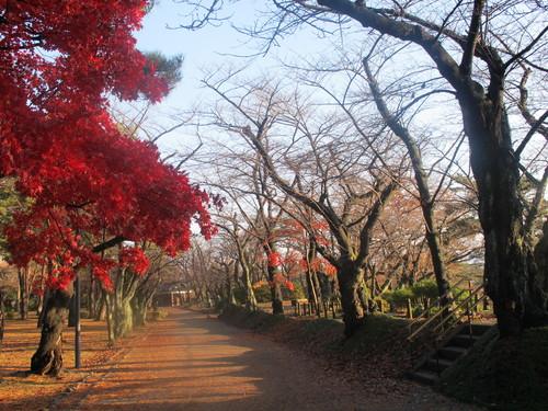 晩秋、千秋公園の紅葉・黄葉・落葉のルクス(lux)・・・その9_c0075701_2184330.jpg