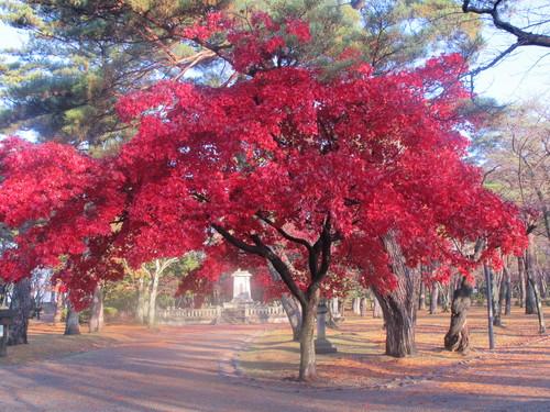 晩秋、千秋公園の紅葉・黄葉・落葉のルクス(lux)・・・その9_c0075701_2185128.jpg