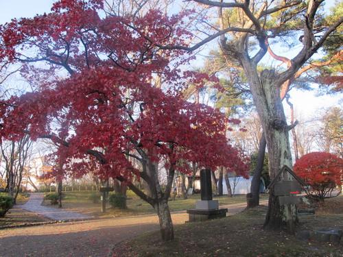 晩秋、千秋公園の紅葉・黄葉・落葉のルクス(lux)・・・その9_c0075701_2191499.jpg