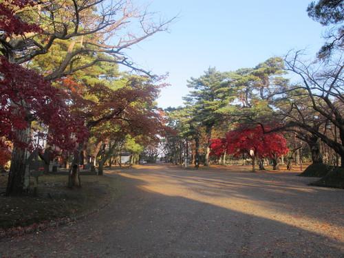 晩秋、千秋公園の紅葉・黄葉・落葉のルクス(lux)・・・その9_c0075701_2194776.jpg