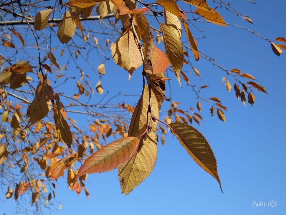 紅葉も終わりか_f0141609_111201.jpg