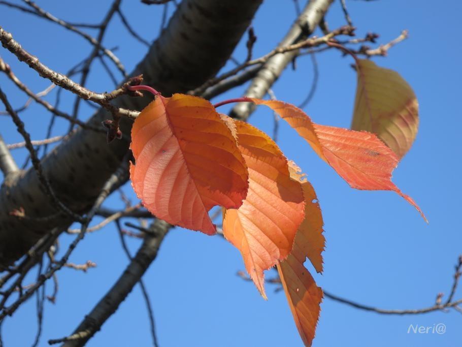 紅葉も終わりか_f0141609_11122286.jpg