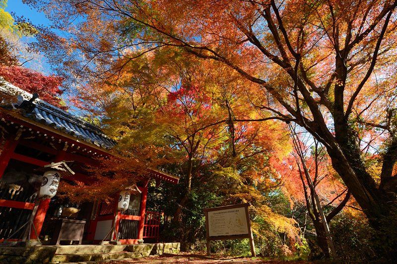 2013京都の紅葉!・金蔵寺 其の一_f0032011_2003595.jpg
