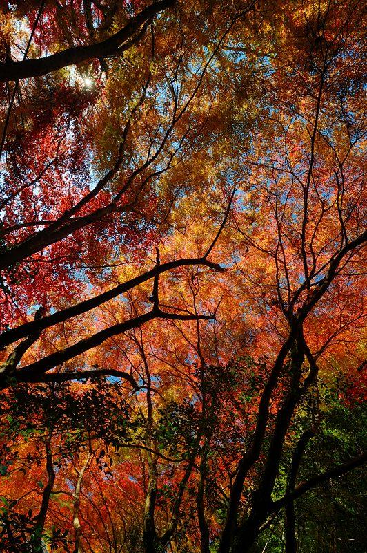 2013京都の紅葉!・金蔵寺 其の一_f0032011_2005089.jpg