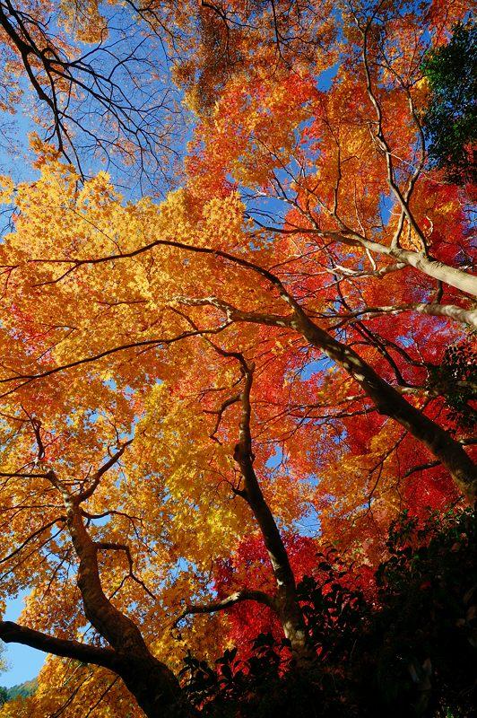 2013京都の紅葉!・金蔵寺 其の一_f0032011_20102831.jpg