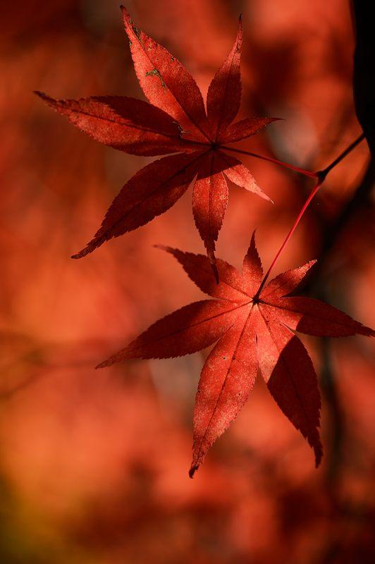 2013京都の紅葉!・金蔵寺 其の一_f0032011_20105644.jpg