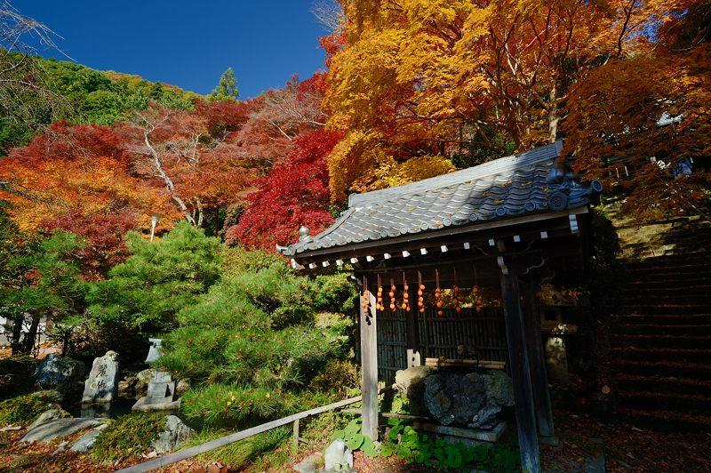 2013京都の紅葉!・金蔵寺 其の一_f0032011_20111246.jpg