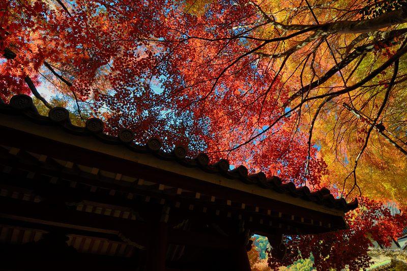 2013京都の紅葉!・金蔵寺 其の一_f0032011_20154100.jpg