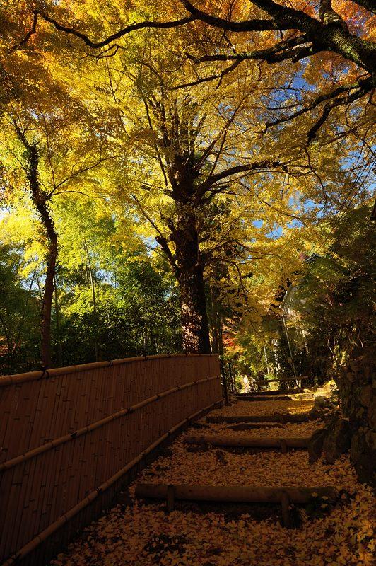 2013京都の紅葉!・金蔵寺 其の一_f0032011_2042499.jpg