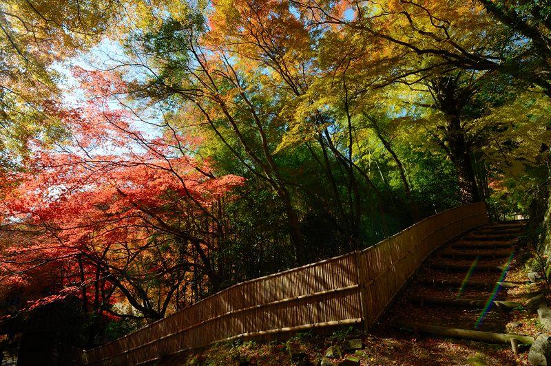 2013京都の紅葉!・金蔵寺 其の一_f0032011_204970.jpg
