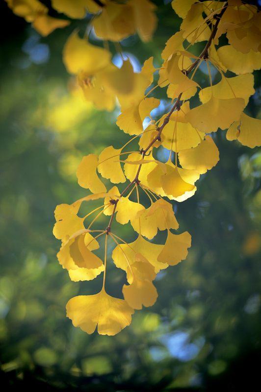 2013京都の紅葉!・金蔵寺 其の一_f0032011_2055397.jpg